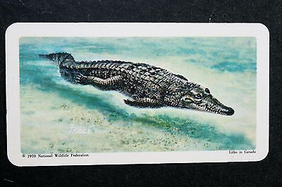 American Crocodile     Illustrated Card  # VGC