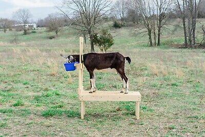 New Goatstand.com Carpenter Built Goat Milking Stand - Full 42in. Natural Deck