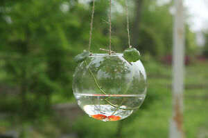Glass-Hanging-Ball-Vase-Fish-Aquarium-Tealight-Candle-Holder-Glass-Terrarium-x-1
