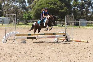 Fun trail riding, pony club or games mount Fingal Mornington Peninsula Preview