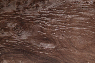 Walnut Burl Raw Wood Veneer Sheets 17 X 18 Inches 142nd Thick   E4705-11