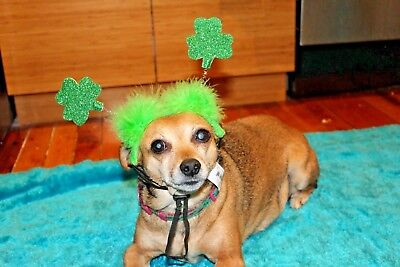 St. Patrick's Day Boppers Dog or Cat Costume / Hat - S/M & M/L