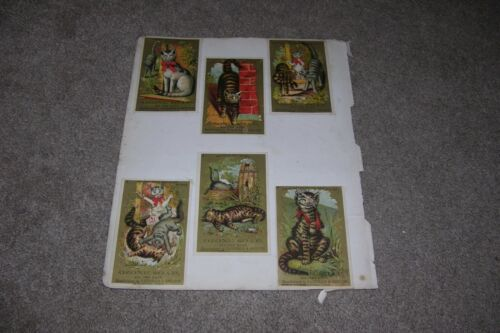6 Antique Ozone Soap Cat Trade Cards, Bridgeport CT