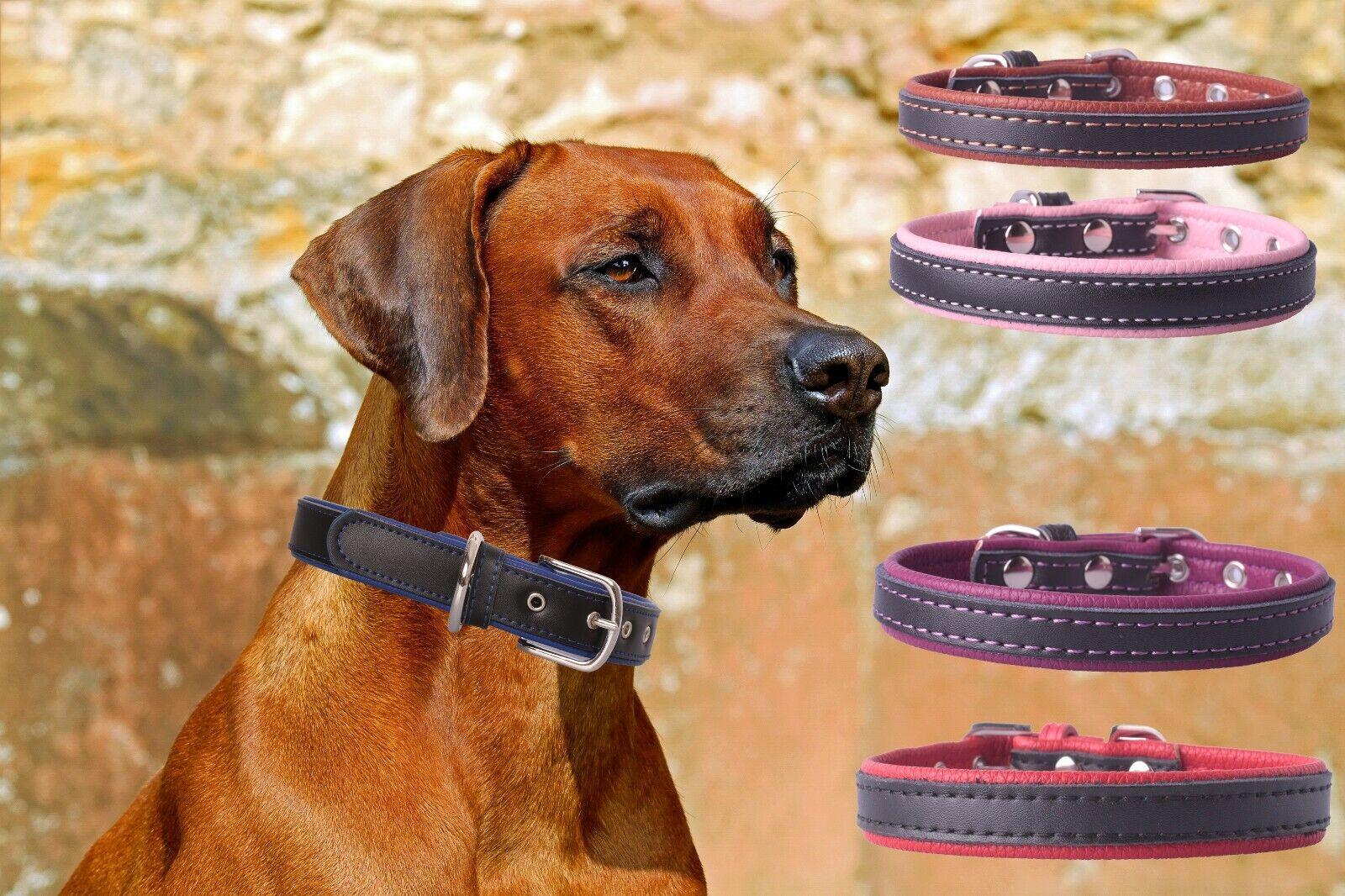 Hundehalsband Hund Lederhalsband Hundeband alle Hundegrößen Doppel Farbe