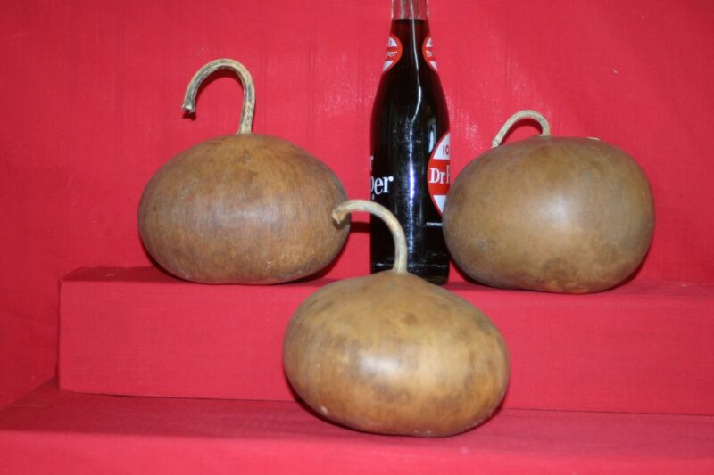 "GOURDS 3 - 4"" UP TO 5-3/4""  CANTEEN GOURDS ( DRIED AND CLEANED)"