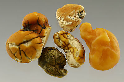 Lot of 5 Natural Raw Rough Rare Drops Nugget Genuine BALTIC AMBER 13.5g s70222-2