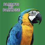 parrotsofparadise