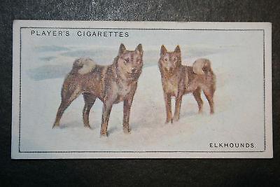 Elkhound   Original 1920's  Vintage Illustrated Card  # VGC