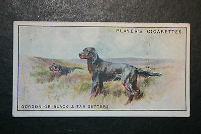 Gordon Setters     Original 1920's  Vintage Illustrated Card