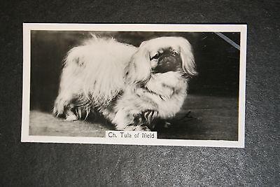 Pekingese  Show Champion  1930's Vintage Photo Card  VGC