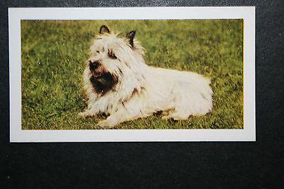 Cairn Terrier    Vintage Colour Photo Card    Excellent Condition