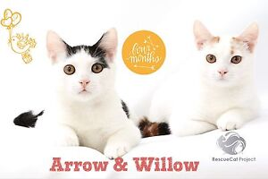 Willow & Arrow Castle Hill The Hills District Preview
