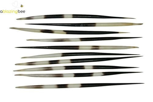 South African Porcupine Quills 10 Thick PCS 3-5 5-6 6-7 7-8 Inches Natural Beach