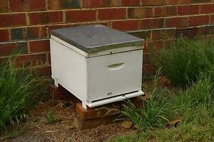 Bee Hive Brood Box with productive and docile bees Surrey Hills Boroondara Area Preview