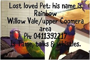 Lost rainbow lorikeet Willow Vale Gold Coast North Preview