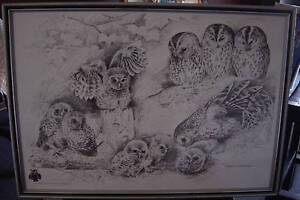 BABY OWLS PICTURE BY POLLYANNA PICKERING Cooranbong Lake Macquarie Area Preview