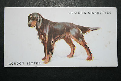 Gordon Setter    Superb Original 1931 Vintage Illustrated Card  # VGC