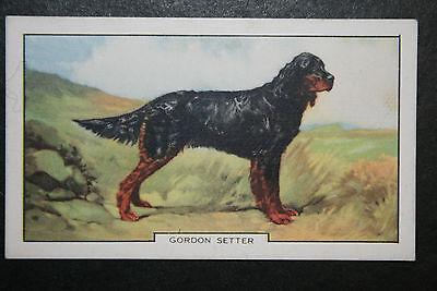 Gordon Setter  1930's Original  Vintage Coloured Card  VGC
