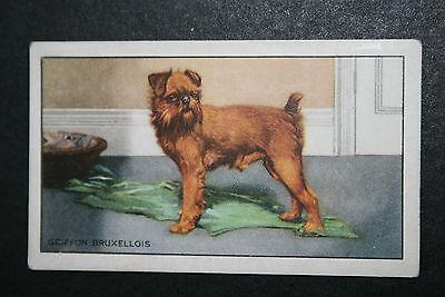 Griffon Bruxellois   Original 1930's Vintage Card # VGC
