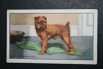 Griffon Bruxellois   Original 1930's Vintage Illustrated Card