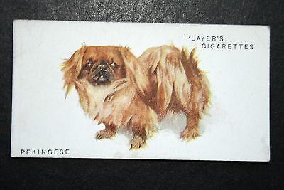 Pekingese  Painting Card  Vintage Early 1930's Original  #   VGC