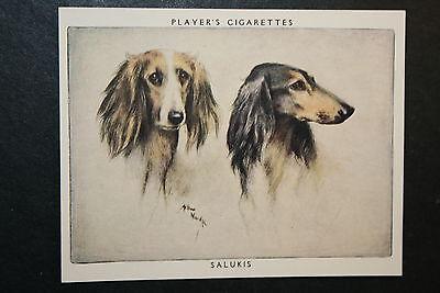 SALUKI   Superb Vintage Twin Portrait Card   EXC