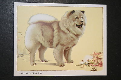 Chow Chow   1930's Champion   Large Vintage Card   EXC