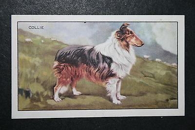 Rough coated Collie    Original 1930's Vintage Illustrated Card  CAT B