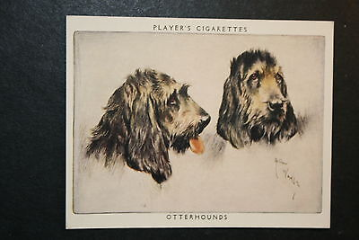 OTTERHOUND    Large Vintage Twin Portrait Card   EXC
