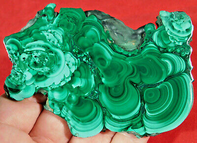 A Larger Polished Malachite STALAGMITE Slab or Slice! From The Congo 98.8gr
