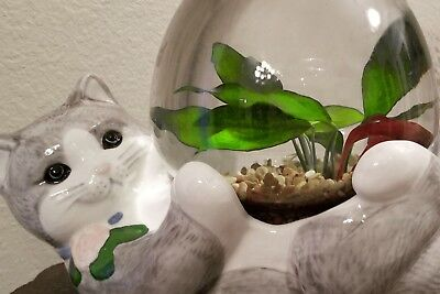 Betta Fish Bowl Set Up with adorable cat holding bowl fishbowl, rocks, food ++++