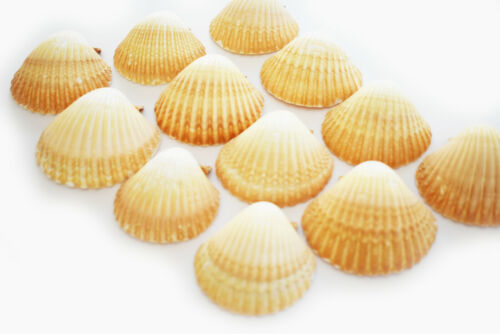 """12 Mexican Cup Deep Scallop Shells (2 1/2-3"""") for Baking, Beach Crafts & Decor"""