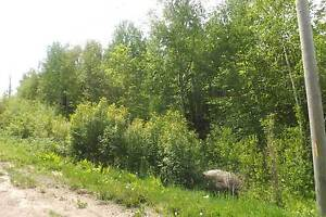 Terrain - à vendre - Saint-Faustin/Lac-Carré - 20531597