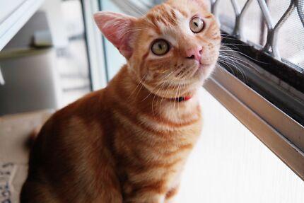 Kitten free to loving home Broadbeach Gold Coast City Preview