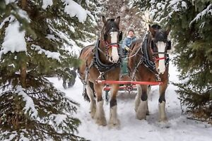 Come and Join our Carriage Driving Group