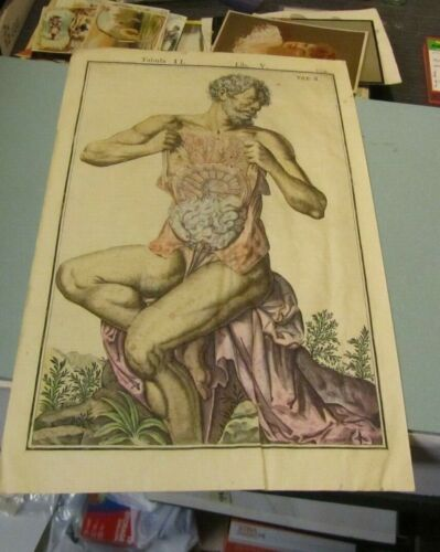 Antique 18th Century Color Stomach Veins Intestines Anatomical Chart Latin Text