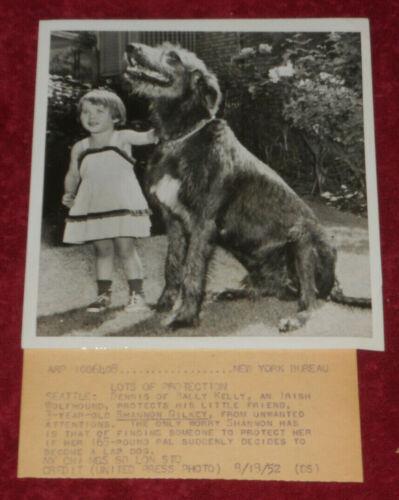 1952 Press Photo Dennis of Ballykelly Irish Wolfhound Protects Shannon Gilkey WA