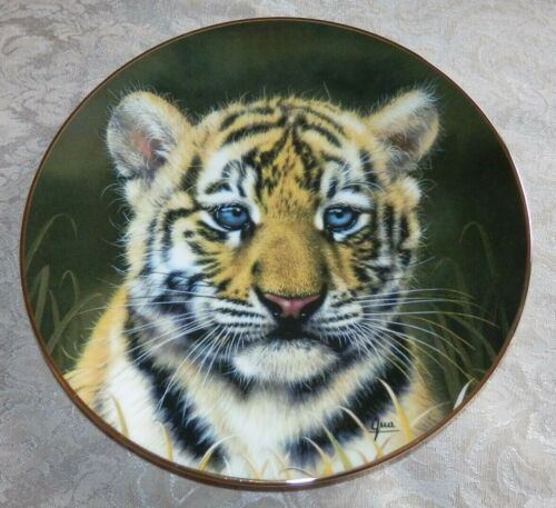 TIGER CUB Plate by GUA Cubs of the BIG CATS Plate Collection BLUE EYES Japan