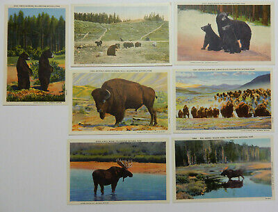 7-Yellowstone National Park-Bear-Bison-Moose-Animal-Haynes Vintage Postcards Lot