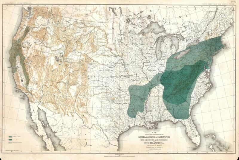 1884 Sargent Arboreal Map of the United States Depicting Beech Trees