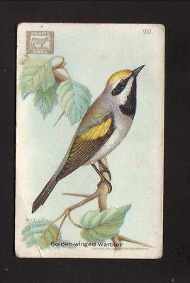 Golden Winged Warbler  1918 Church   Dwight Useful Birds Of America Card