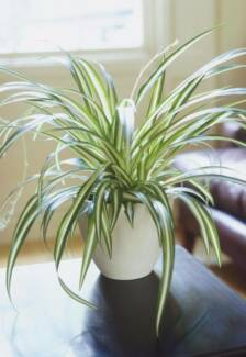 Best air purifying plants ✓indoors ✓apartments ✓Open 7 Days