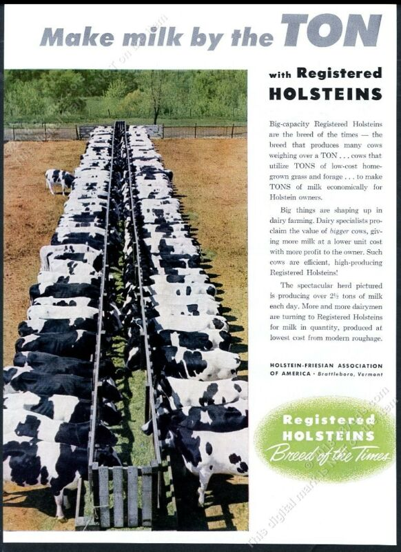 1954 Holstein Friesian cow cattle color photo vintage print ad
