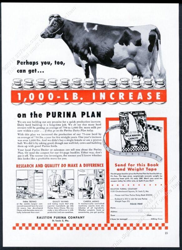 1952 dairy cow photo Ralston Purina feed vintage print ad
