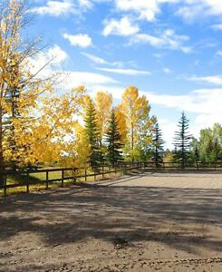 Relaxed & Friendly Horse Boarding in Springbank
