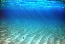 VLIES Fototapete-UNTERWASSER- -Meer Ozean Fische Korallen Sand-Dünen See 4023V