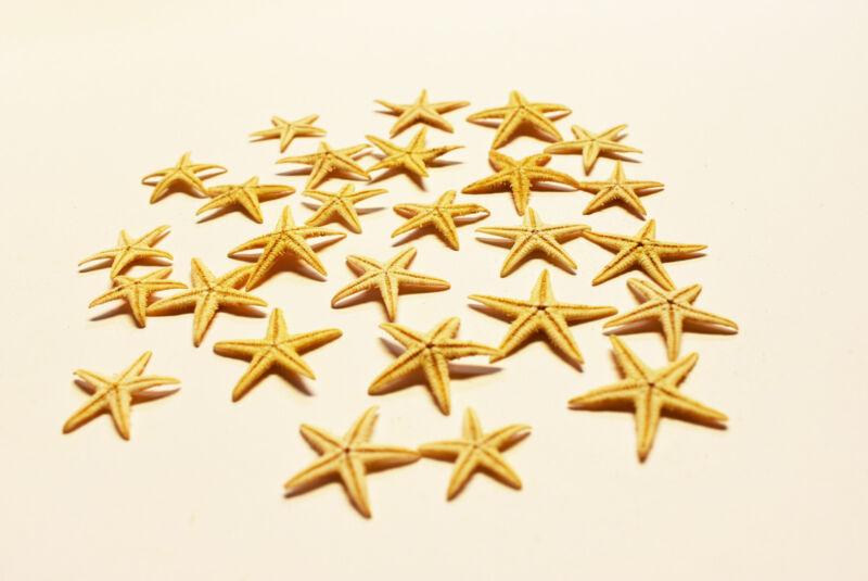 """25 Tiny Mini Starfish Tan Flat Natural (13-25mm) 1/2 - 1"""" Beach Crafts Decor."""