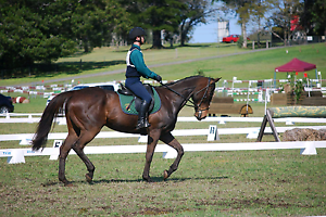 Bombproof at home and competition Toowoomba Toowoomba City Preview