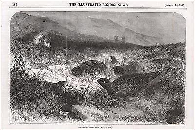 GROUSE BIRD HUNTING, SHOOTING with DOG, antique engraving, original 1857