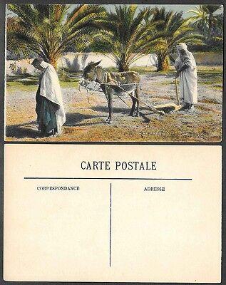 Old Algeria Postcard - Arab Farmers